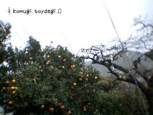 Photo201004020032