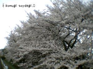 Toydegi0092